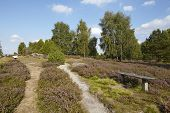 ������, ������: Luneburg Heath Small Path And Bench In The Heathland