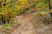 Постер, плакат: Rocky road in mountain forest at fall season