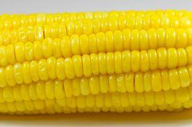 stock photo of corn cob close-up  - Close up of corn cob isolated on white background - JPG