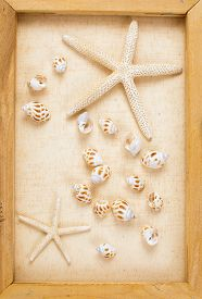 foto of conch  - Vintage image of conch shell and starfish on the canvas frame - JPG