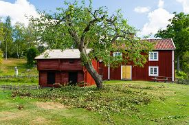 image of farmhouse  - A newly pruned apple tree with branches still on the ground - JPG