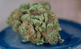 picture of agate  - Close up macro of Papaya Medicinal Medical Marijuana on blue agate - JPG