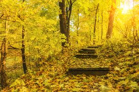 picture of stairway  - Stairway to the beautiful sunny autumn forest - JPG