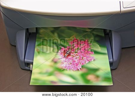 Busy Bee Printing