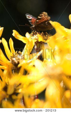 Butterfly1b