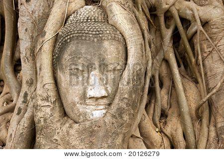 Buddha Head In Vines