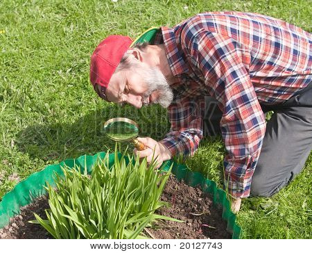 A Man Inspects The Flower Stems