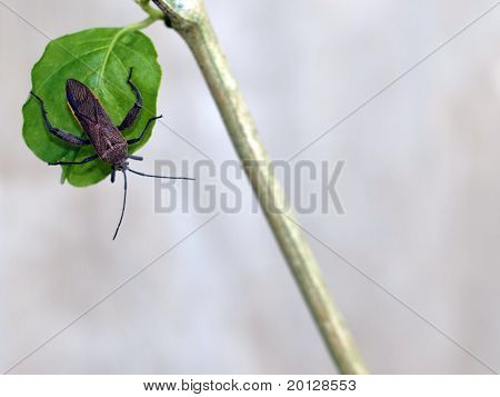 insect on the leaf in grey background
