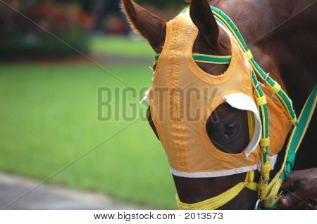 Race Horse Wearing Orange Blinkers