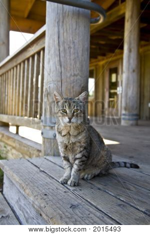 Rural Cat On Porch 2