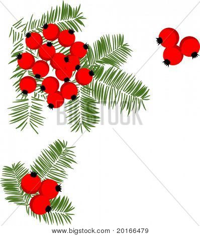 tree branches and berries illustration