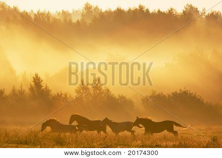 Herd in sunrise