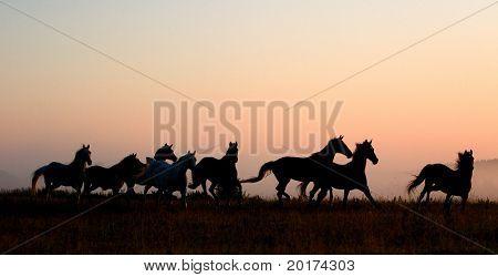 herd in sunrise