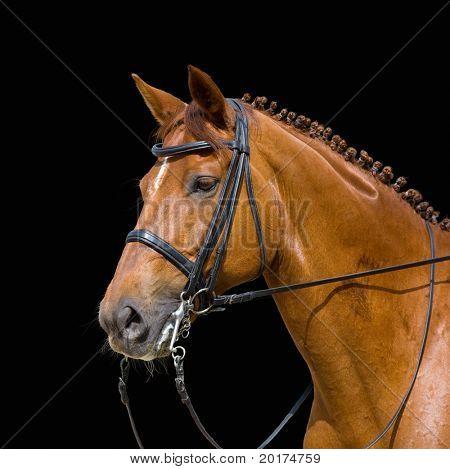 dressage, chesnut horse - isolated on black