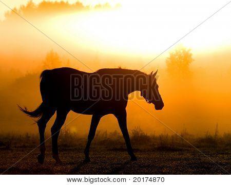 Kontur des Pferdes in Morgen