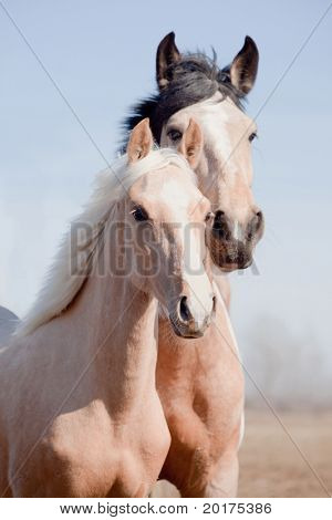 Portrait of beautiful appaloosa mare with cream foal in field