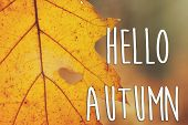 Hello Autumn Fall Text Sign On Beautiful Yellow Autumn Leaf With Heart Shaped Tear On The Background poster