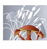 image of bull rushes  - mushrooms with grasses - JPG