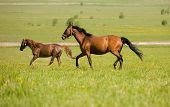 foto of brown horse  - two horses in field - JPG