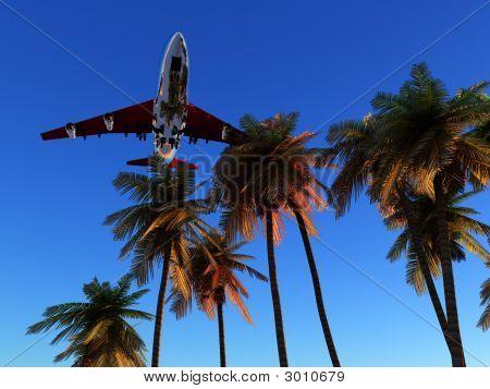 Plane And Wild Palms