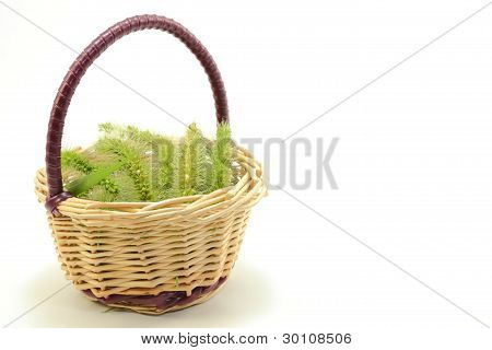 basket of green foxtail panicle