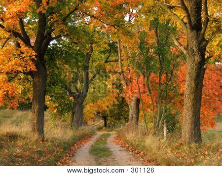 Autumn04