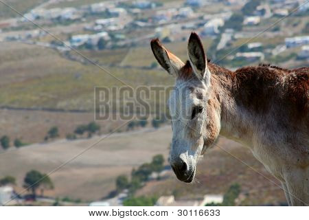 A Donkey Stands On A Hillside