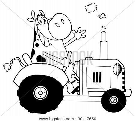 Black And White Cow Farmer Waving And Driving A Tractor