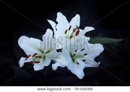 Three Lily Flowers On Black Silk