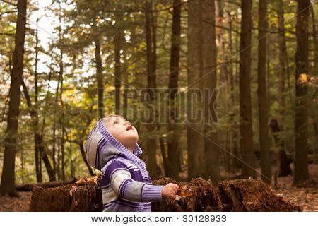 Small Child In Woods Looking Up To The Sky
