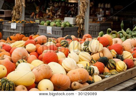 Pumpkins And Gourds In A Farmer's Market Setting