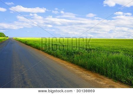 Asphalt Road Along The Wheat Fields On A Summer Day