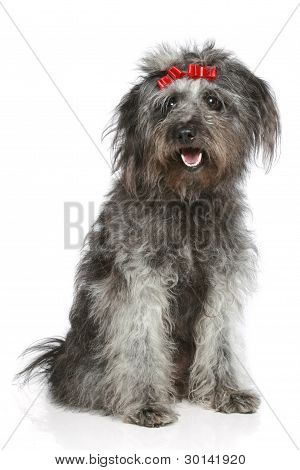 Shaggy Gray Mongrel With Red Ribbons