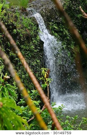 Cataratas de bambú