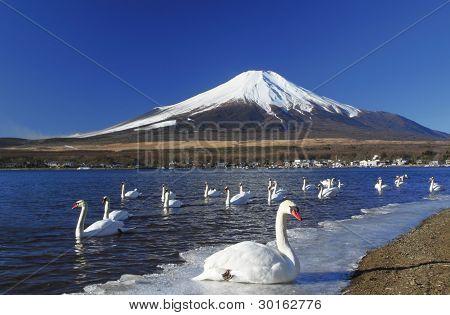 Mt.fuji And Swan