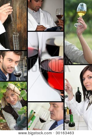 oenologists and wine producers examining wine