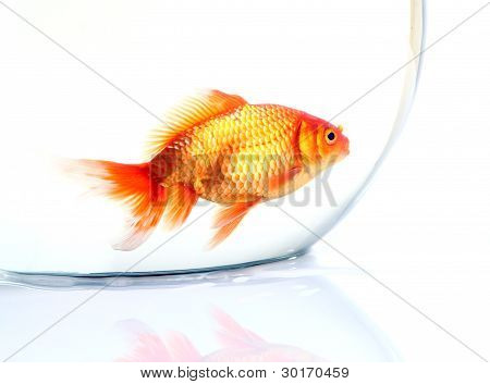 Gold fish in the bowel