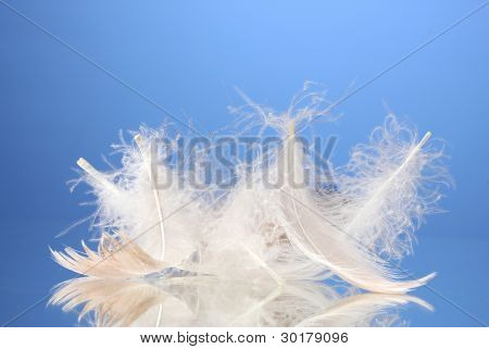 beautiful feathers on blue background