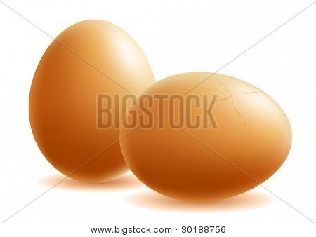 two eggs. vector illustration. isolated on white.