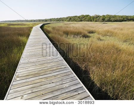 Boardwalk At Marsh.