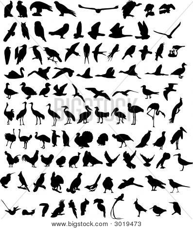 100 Vögel