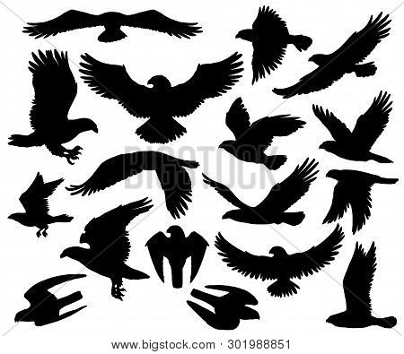 poster of Eagles, Falcons And Predatory Birds Heraldry Silhouettes. Vector Isolated Heraldic Coat Of Arms Symb