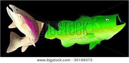 Rainbow trout and largemouth bass