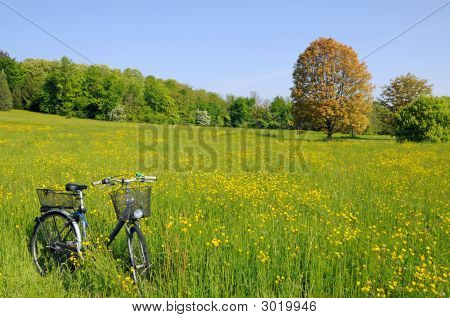 Bicycle In A Meadow