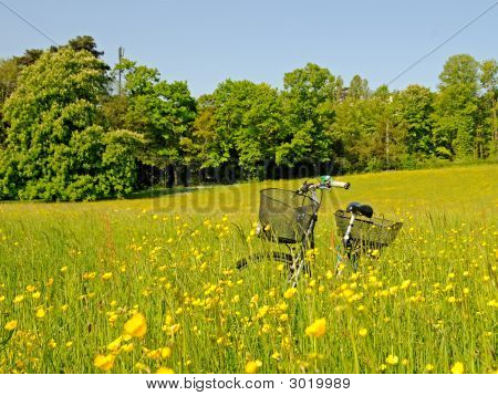 Bicycle In The High Grass