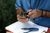 Tree Swallow aka Tachycineta bicolor. Ornithologist weighs, measures, and bands 9 day old fledgling  poster