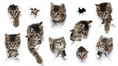 Cats In Holes Of Paper, Little Grey Tabby Kittens Peeking Out Of Torn White Background, Ten Funny Pl poster