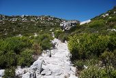 picture of fynbos  - Beautiful mountain path in Cape Point National Park - JPG