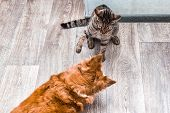 Cat And Dog Are Played Together. Cat And Dog Are Fighting. Apartment. Cat And Dog Together poster
