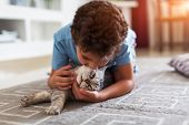 Happy Little Child Playing With Grey British Shorthair On Carpet At Home poster